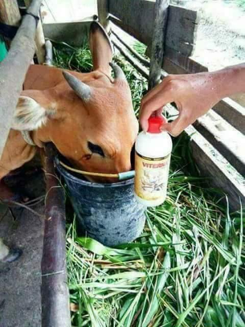 ternak yang menguntungkan dalam waktu singkat