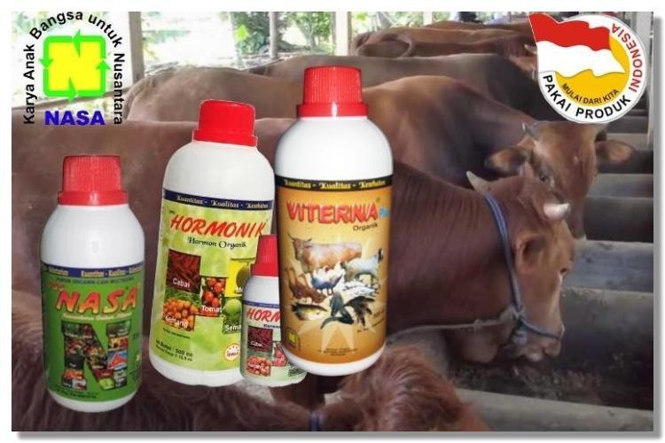 gambar-sapi-limosin-super-untuk-usaha-ternak-sapi-nasa-kaltim-viterna-plus